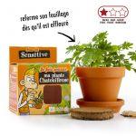 Kit terre cuite 8 cm Explore nature Mimosa - Radis et Capucine