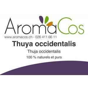Thuya occidental