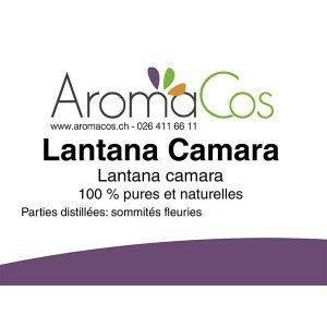 Lantana Camara